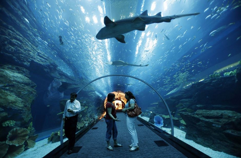 Georgia Aquarium Tunnel