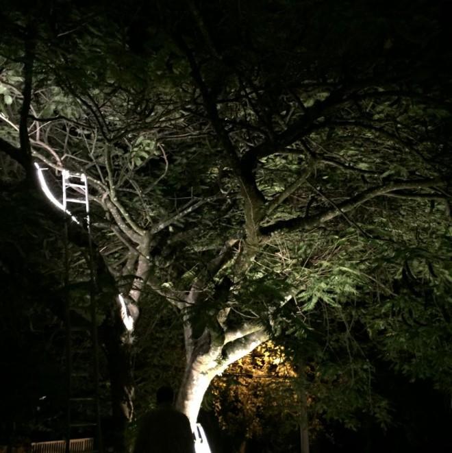 Teste de fita LED sobre galhos de árvore