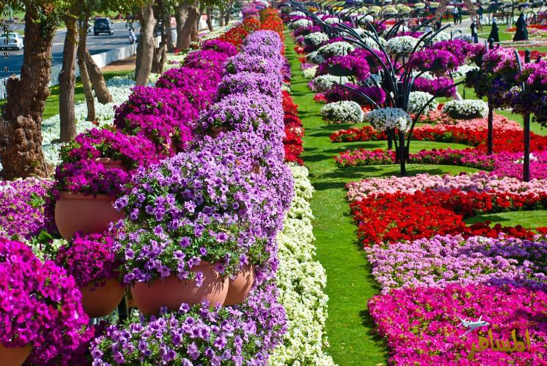 Al Ain Paradise 4